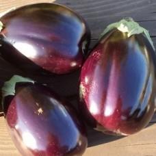 Насіння баклажан фіолетове диво gl seeds