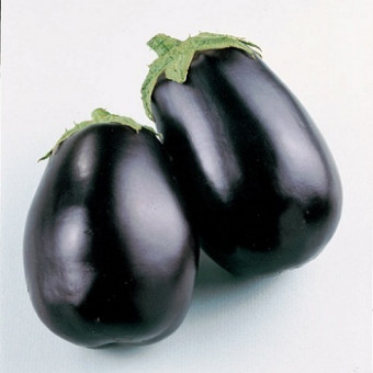 Насіння Баклажан Чорний красунчик GL SEEDS