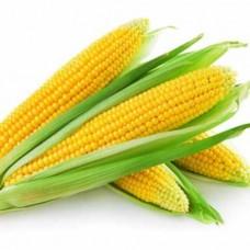 Насіння кукурудза брусница gl seeds