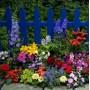 Насіння квітів, сидератів, газонна трава ТМ GL SEEDS