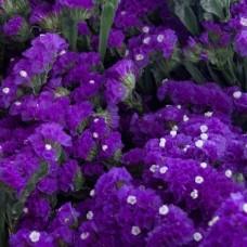 Насіння сухоцвіт статиця блю айс gl seeds