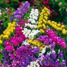 Насіння сухоцвіт статиця суприм букет gl seeds