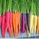 Морква GL SEEDS