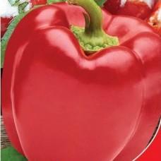 Насіння перець червоний сир gl seeds