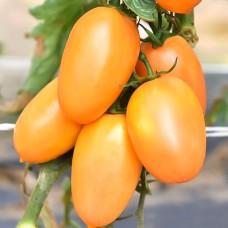 Насіння Помідор Де-Барао оранжевий GL SEEDS