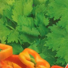 Насіння петрушка листова гігантелла gl seeds