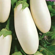 Насіння баклажани білі (канада)