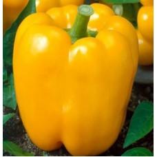 Насіння перцю жовте чудо