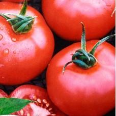 Насіння томатів вікторія