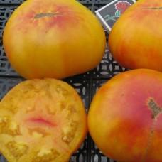 Насіння томатів загадка природи