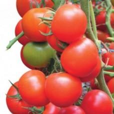 Насіння томатів зеро