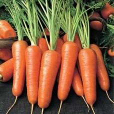 Насіння морква артек gl seeds