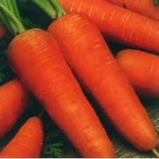 Насіння морква шантене роял gl seeds