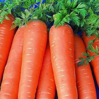 Насіння Морква Віта Лонга GL SEEDS