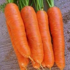 Насіння морква яскрава gl seeds