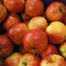 Саджанець яблуня джона голд