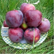 Саджанець яблуня вільямc прайд