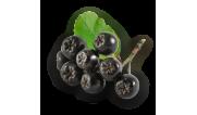 Аронія (чорна горобина)