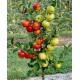 Саджанці плодово-ягідних культур