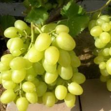 Виноград свіжий аркадія