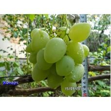 Виноград свіжий монарх