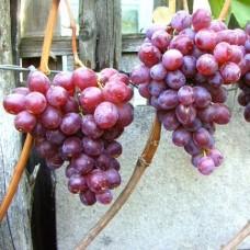 Виноград свіжий нізіна